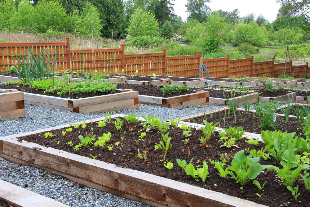 Community Gardens and Local Food Procurement - APCCP